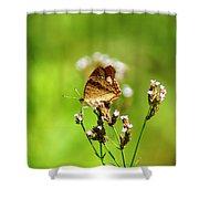 Anartia Jatrophae Shower Curtain