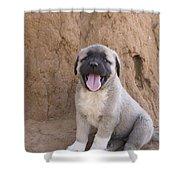Anatolian Shepherd Puppy Shower Curtain
