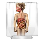 Anatomy Of A Childs Full Digestive Shower Curtain