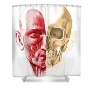 Anatomy Of A Male Human Head, With Half Shower Curtain