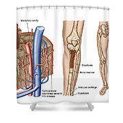 Anatomy Of Human Bone Marrow Shower Curtain