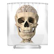 Anatomy Of Human Skull, Cutaway View Shower Curtain by Leonello Calvetti