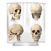 Anatomy Of Human Skull From Different Shower Curtain by Leonello Calvetti