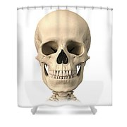 Anatomy Of Human Skull, Front View Shower Curtain