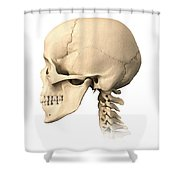 Anatomy Of Human Skull, Side View Shower Curtain by Leonello Calvetti