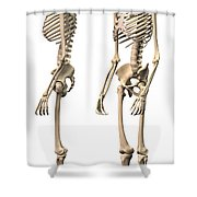 Anatomy Of Male Human Skeleton, Side Shower Curtain