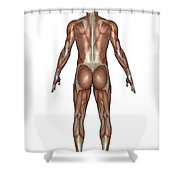 Anatomy Of Male Muscular System, Back Shower Curtain