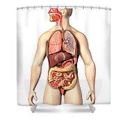 Anatomy Of Male Respiratory Shower Curtain