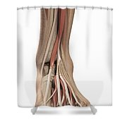 Anatomy Of The Foot Shower Curtain