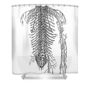 Anatomy: Spinal Nerves Shower Curtain