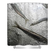 Anchovies,engraulis Moradx, Swim Shower Curtain