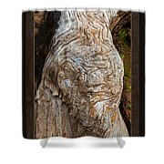 Ancient Expression Of Beauty Shower Curtain