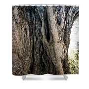 Ancient Old Fine Olive Tree 6 Mountain Spain  Shower Curtain