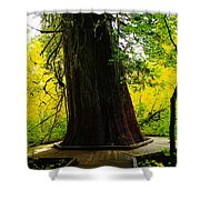 Ancient Old Growth Shower Curtain