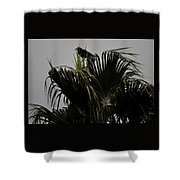 And A Crow Oh Oh In A Palm Tree Shower Curtain