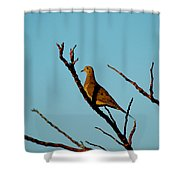 And A Dove In A Tree Shower Curtain