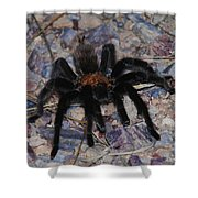 And Along Came A Little Spider .  Shower Curtain