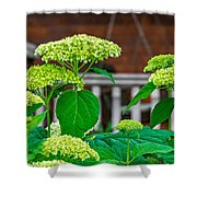 And The Livin' Is Easy Shower Curtain
