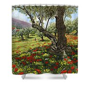 Andalucian Olive Grove Shower Curtain