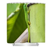 Andaman Day Gecko  India Shower Curtain