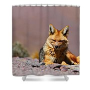 Andean Fox Portrait Shower Curtain