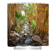 Andreas Creek In Andreas Canyon In Indian Canyons-ca Shower Curtain