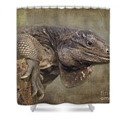 Anegada Ground Iguana - Houston Zoo Shower Curtain