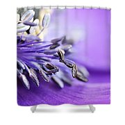 Anemone Flower Close Up Shower Curtain