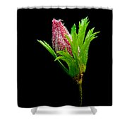 Anemone Flower Details Shower Curtain
