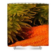 Anenome And Starfish Shower Curtain