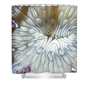 Anenomes 18 Shower Curtain