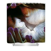Anenomes 2 Shower Curtain