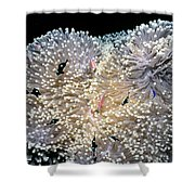 Anenomes 4 Shower Curtain