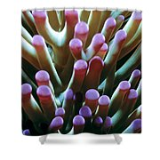 Anenomes 6 Shower Curtain