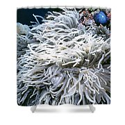 Anenomes 9 Shower Curtain