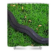 Anerythristic Red Belly Snake Shower Curtain
