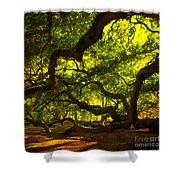 Angel Oak Limbs Crop 40 Shower Curtain