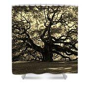 Angel Oak Tree Sepia Shower Curtain