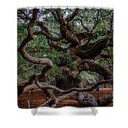Angel Oak Tree Treasure Shower Curtain