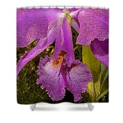 Angel Orchid Gold Leaf Shower Curtain