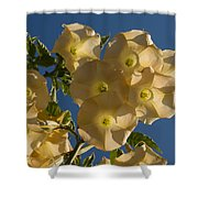 Angel Trumpets In The Sky Shower Curtain