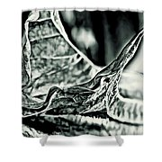 Angel Wing Variation Black White Shower Curtain