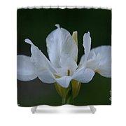 Angel Wings Iris Shower Curtain
