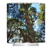 Angeles Sun -beautiful Tree With Sunburst In Angeles National Forest In The San Gabriel Mountails Shower Curtain
