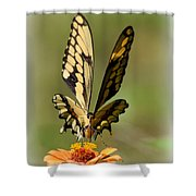 Angelic Butterfly  Shower Curtain