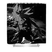 Angels Or Dragons B/w Shower Curtain
