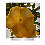 Angel's Trumpets Shower Curtain