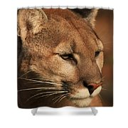 Angle Of Pursuit Shower Curtain