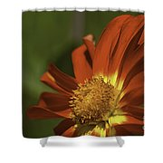 Angled To The Sun Shower Curtain