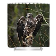 Angle's Wings Shower Curtain